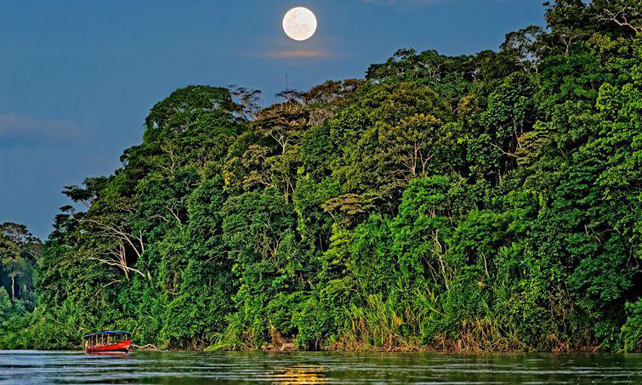 Immersion in the Amazon
